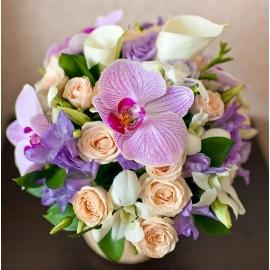 Magia di orchidee